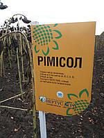 Подсолнечник под Евролайтинг РИМИСОЛ, Высокоурожайный, Засухоустойчивый гибрид. Экстра, фото 1