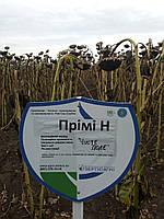 Семена подсолнечника ПРИМИ под евролайтнинг, 108-113 дней, Оригинатор: Нови Сад / Стандарт