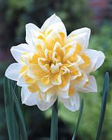 Нарцисс махровый Irene Copeland 2 шт, фото 1