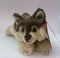 Мягкая игрушка Волчонок Чибо - JD-286