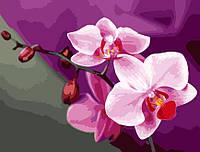 "Живопись по номерам Идейка ""Розовые орхидеи"" (KHO1081) 40 х 50 см (без коробки)"
