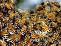 "Гель на пчелином подморе ""Апитромб"""