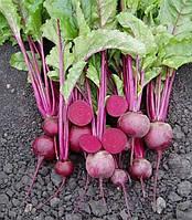 Семена свеклы Пабло F1 (25000 с) столовая средняя, фото 1