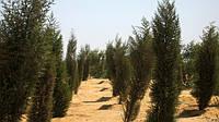 Египетские ученые нашли способ выращивать зеленые леса в пустыне