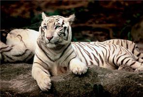 Пазл Trefl 26075 Бенгальский тигр 1500 эл