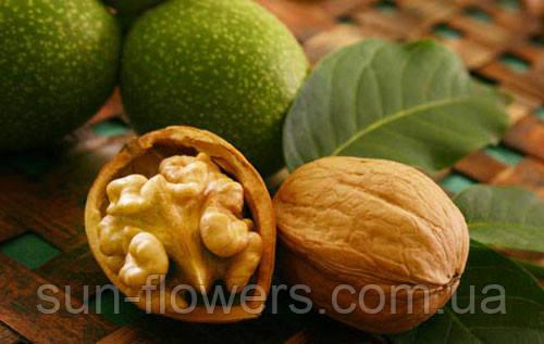 Грецкий орех лечебные свойства.