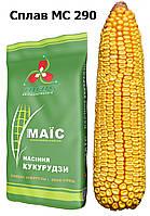 Сплав МС 290 (ФАО 290) зерновой гибрид кукурузы. Рекомендуем для региона Северная Степь