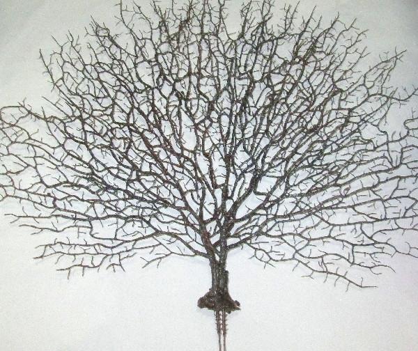 Ветка коралла коричневая