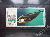 Марка СССР 1974 гренландский кит н/гаш
