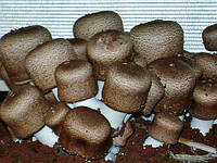 Мицелий (грибница) ШАМПИНЬОНА БРАЗИЛЬСКОГО маточный зерновой биологически высушеный  New