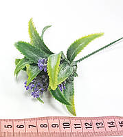 Трава лаванда с листьями кактуса