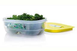 Контейнер Умный холодильник 800 мл Tupperware (крышка салатовая)