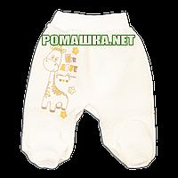 Ползунки (штаны) на широкой резинке р. 56 утолщенные ткань КАПИТОН 100% хлопок ТМ Алекс 3220 Бежевый