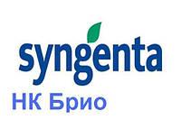 Гибрид подсолнечника Сингента НК Брио (Syngenta)