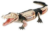 Анатомическая модель Крокодил, 4D Master (26114)