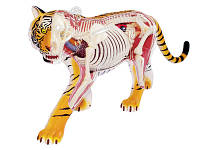Анатомическая модель Тигр, 4D Master (26105)