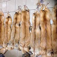 Шкуры мех рыжей лисы длинношерстной, длина 55-65 см (от ушей)