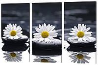 """Модульная картина """"Ромашки на камнях"""" 151x99 см"""