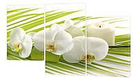 "Модульная картина ""Орхидеи Фаленопсис"" 286"