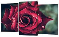 """Модульная картина """"Роза"""" 160x99 см"""