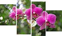 """Модульная картина """"Орхидея"""" 155x103 см"""