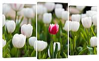 "Модульная картина ""Тюльпаны"" 160х99 см"