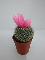 Кактус (рожевий) ОРА АГРО-ЕКО, фото 1