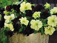 Квіти проф-пакет