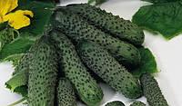 ПАСАЛИМО F1 - семена огурца, 500 семян, Syngenta, фото 1