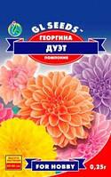 Семена Георгина помпонная Дуэт, фото 1