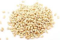 Зерно Пшеница (озимая) органическая