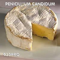 Закваска Penicillium Candidum ЧИЗПРО 100 (10шт. Х 10л) для сыра с белой плесенью