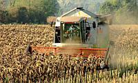 Сбор урожая подсолнечника с минимальными потерями