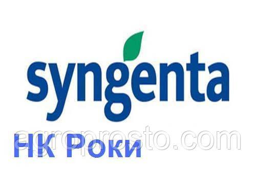 Гибрид подсолнечника Сингента НК Роки (Syngenta)