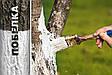 Побелка для деревьев