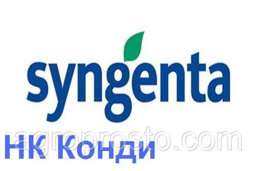 Гибрид подсолнечника Сингента НК Конди (Syngenta)