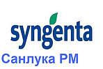 Гибрид подсолнечника Сингента Санлука РМ (Syngenta)