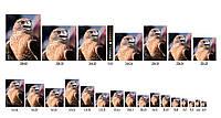Размеры фотографий для печати таблица