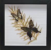"""Бабочки в рамке """"На листе"""" (30,5х30,5х3,5 см)"""