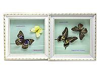 Бабочки в рамке (21х21х3 см)