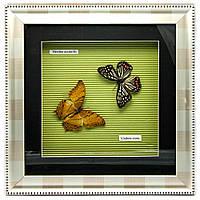 Бабочки в рамке (30х30х3,5 см)