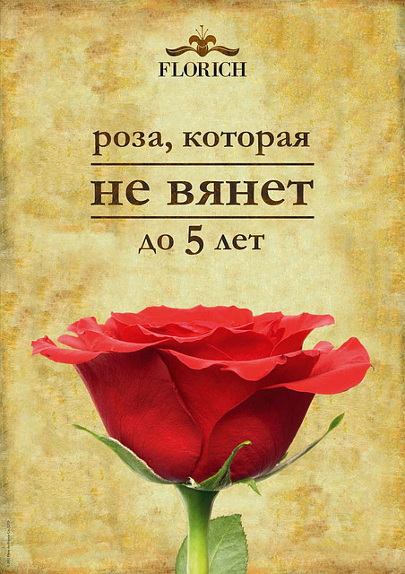 Розы FLORICH.