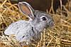 Подготовка кроликов к зиме