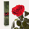 Одна долгосвежая роза FLORICH в подарочной упаковке. Красный рубин 7 карат, короткий стебель. Харьков