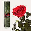 Одна долгосвежая роза FLORICH в подарочной упаковке. Красный рубин 5 карат, средний стебель. Харьков