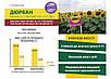 Семена подсолнечника ДЮРБАН A-F 95-102 дн. , фото 3