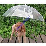 Зонтик (зонт) для выгула собак в дождливую погоду, фото 2