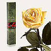 Одна долгосвежая роза FLORICH в подарочной упаковке.Желтый Топаз 5 карат, короткий стебель. Харьков