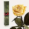 Одна долгосвежая роза FLORICH в подарочной упаковке. Желтый топаз 7 карат, средний стебель. Харьков