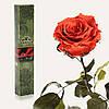 Одна долгосвежая роза FLORICH в подарочной упаковке. Кофейный топаз 5 карат, короткий стебель. Харьков